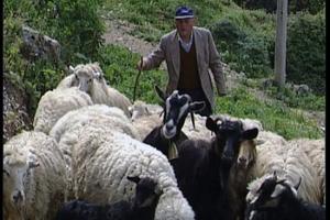 Σύμβαση για τη στήριξη- ανάπτυξη ομάδας παραγωγών κτηνοτρόφων